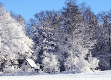 small house in winter landscape with snowy trees