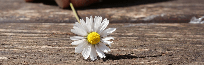 someone holding a daisy on the ground