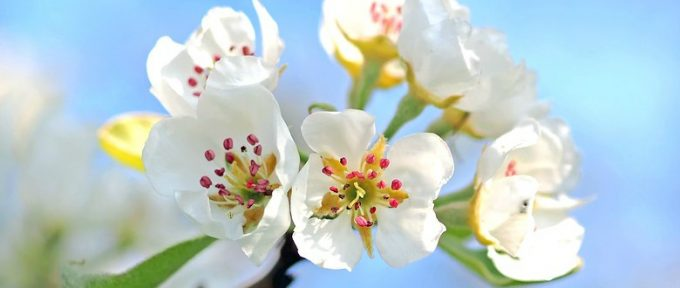 white summer flowers with bright blue sky